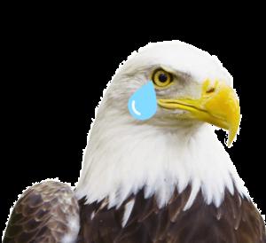 404 sad eagle
